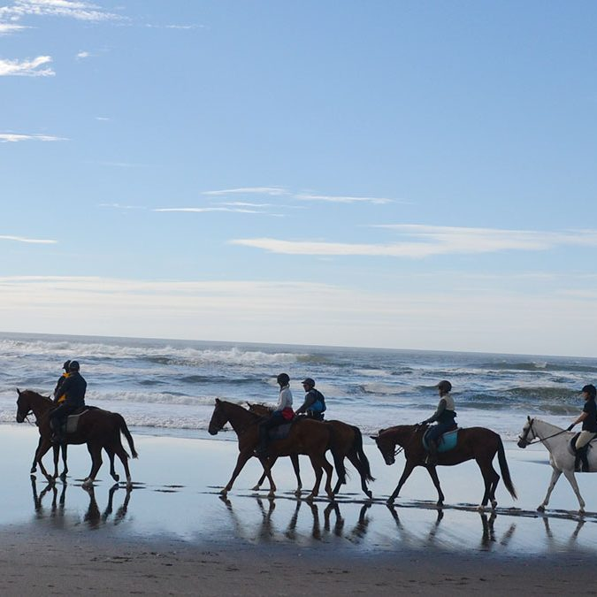 willamette coast horseback riding