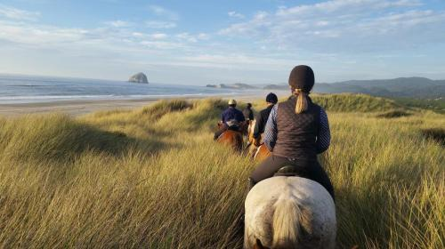 Riding in sea grass gorgeous view (1)