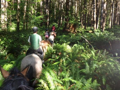 Riding in the ferns_