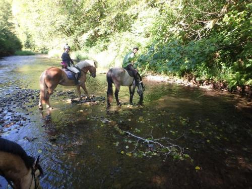 horses getting a drink_